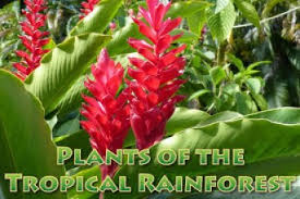 List Of Tropical Plants Names - list of tropical rainforest plant names 4k wallpapers
