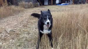 house dogs house dogs running around youtube