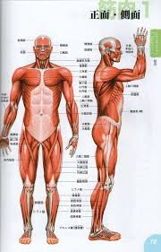 Human Anatomy Reference 38 Best Anatomy Male Images On Pinterest Anatomy Reference