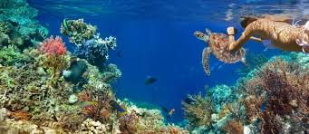 Florida Snorkeling images One of the top ranked u s snorkel spots is in palm beach county jpg