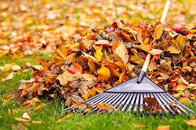 here are 6 fall lawn care tips for memphis tn homeowners
