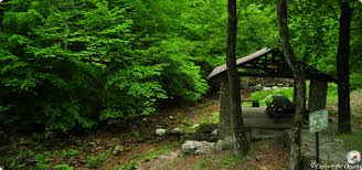 Arkansas nature activities images Collier springs picnic area of arkansas explore the ozarks jpg