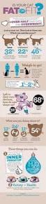 Toys R Us Supervisor Salary The 25 Best Vet Tech Job Description Ideas On Pinterest