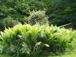 Rock Garden Perennials by Rock River Perennial Garden And Greenhouse Home