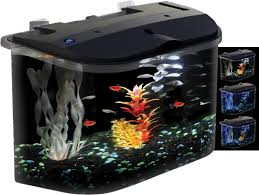 best small fish aquarium aquarium fish pinterest fish