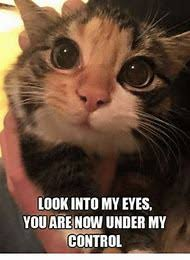 My Eyes Meme - best 25 ideas about eyes meme find what you ll love