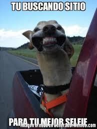 You Are Beautiful Meme - birthday dog quotes luxury dog birthday meme mccarthy travels com