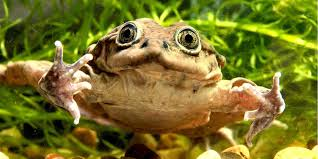 10 000 critically endangered water frogs found dead in polluted lake