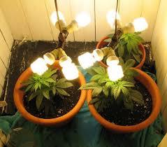 proper lights for growing weed growing marijuana indoors marijuana seed banks