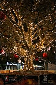 christmas lights ocala fl this magical wonderland reminds me of downtown ocala fl the