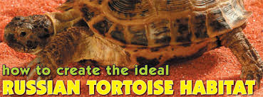 reptile habitat creation how to create the ideal russian tortoise
