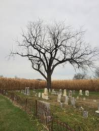 cemetery tree october free photo on pixabay