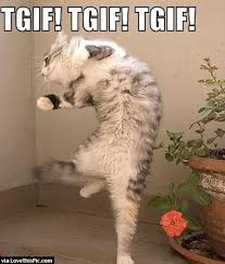 Tgif Meme - funny cat tgif meme pictures photos and images for facebook