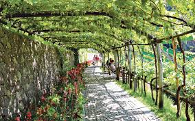 Slo Botanical Garden by Gardens Of Trauttmansdorff Castle In Merano Italy Has Plants From