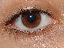 significado de imagenes sensoriales wikipedia sistema sensorial wikipedia la enciclopedia libre
