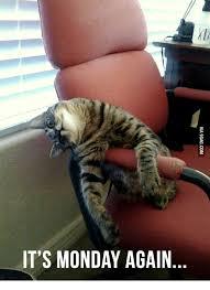 Monday Cat Meme - 25 best memes about lazy cat meme lazy cat memes