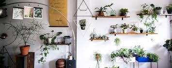 indoor plants singapore showroom tumbleweed plants