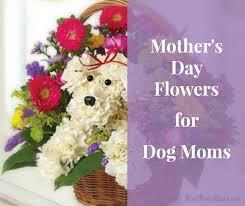 Dog Flower Arrangement Flowers Woof Woof Mama
