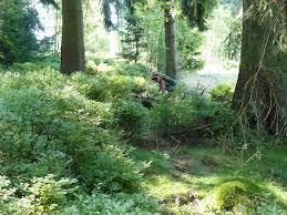 Baden Im Harz Liebesbankweg Die Perfekte Sommer Tour Monika Herbst