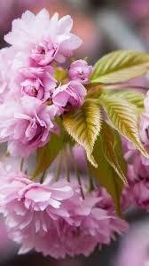 download wallpaper 720x1280 macro flowers plants leaves samsung