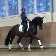 California Flag Horse Warmblood Sales Com Home Page