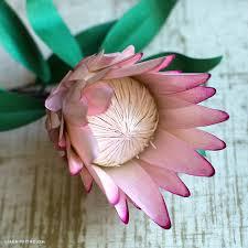 Protea Flower Paper Protea Flower Lia Griffith