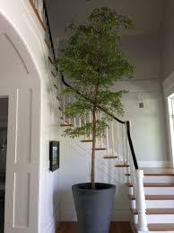 34 interior designs with indoor trees messagenote