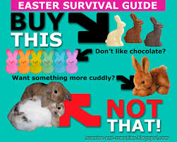 bunnies for easter bunnies and easter bunny psa