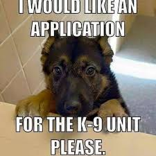 Memes Dog - dog application for k9 what breed is it