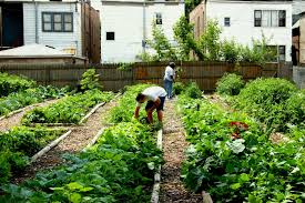How To Grow A Vegetable Garden In Pots Beautiful Vegetable Gardens For Beginners Images Beautiful