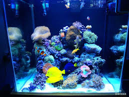 led reef lighting reviews saltwater aquarium lighting led reef aquarium lighting reviews