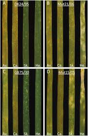 frontiers temporal and spatial variability of fungal structures