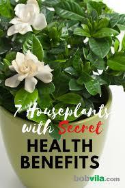 benefits of houseplants 7 beneficial houseplants bob vila