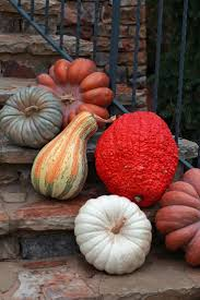 thanksgiving pumpkin decorations 1904 best autumn splendor images on pinterest autumn