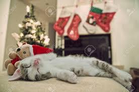 merry christmas cat kitten under tree kitten sleeping on his