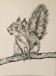 drawn contrast squirrel pencil and in color drawn contrast squirrel