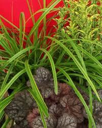ornamental grass planter designs mike s garden guide