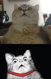Scared Cat Meme - scared cat meme funny cat pictures