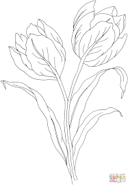 tulip flower coloring page free printable coloring pages