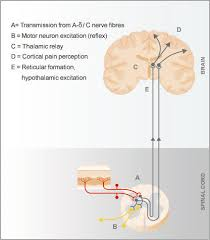 Pain Reflex Pathway Grünenthal Change Pain Emodules