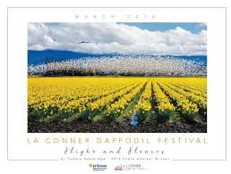 skagit valley tulip festival bloom map la daffodil festival 2016 family getaway festivals