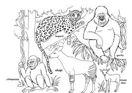 surprising cute baby animal coloring pages with free and 49