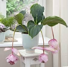 plantes dépolluantes chambre à coucher projet génial quelle plante pour une chambre a coucher photos sur