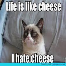 Cheese Meme - life is like cheese i hate cheese funny meme