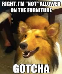 Memes That Will Make You Laugh - 10 dog memes that will make you laugh