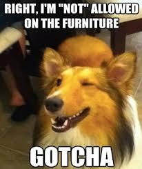 Memes That Make You Laugh - 10 dog memes that will make you laugh