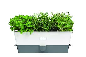 amazon com cole u0026 mason self watering herb keeper triple white