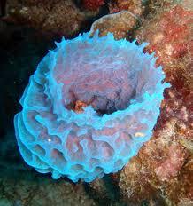 Strawberry Vase Sponge Sponge