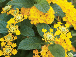images of plants 6 heat tolerant plants you need in your southern garden southern