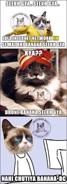 Memes Trolls - backchod billi latest collection of backchod billi memes trolls